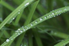 Gouttes de l'eau sur les feuilles vertes après pluie Photos libres de droits