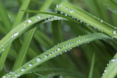 Gouttes de l'eau sur les feuilles vertes après pluie Photographie stock libre de droits
