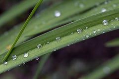 Gouttes de l'eau sur les feuilles vertes après pluie Photographie stock