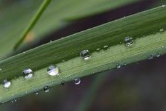 Gouttes de l'eau sur les feuilles vertes après pluie Photo stock