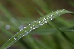 Gouttes de l'eau sur les feuilles vertes après pluie Image libre de droits