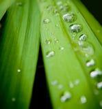 Gouttes de pluie Image stock