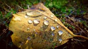 Gouttes de pluie Images libres de droits