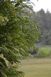 Gouttes de pluie dans l'arbre Photos stock