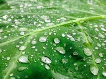 Gouttes de pluie qui sont tombées sur les feuilles, qui est à l'arrière-plan Image stock