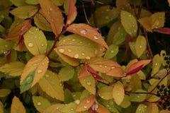 Gouttes de pluie sur des feuilles Image stock