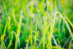 Gouttes de pluie sur des lames d'herbe Photographie stock libre de droits