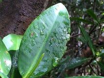 Gouttes de pluie sur la lame verte Photos stock