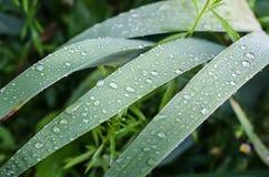 Gouttes de pluie sur les feuilles vertes images stock