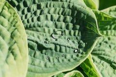 Gouttes de pluie sur les feuilles vertes Images libres de droits