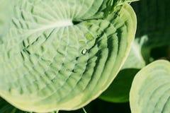 Gouttes de pluie sur les feuilles vertes Photo stock