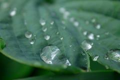 Gouttes de pluie sur les feuilles vertes d'un plan rapproché d'usine Photo stock