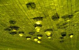 Gouttes de pluie sur une texture verte. Photographie stock