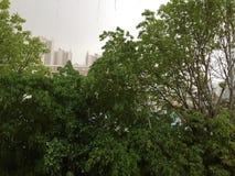 Gouttes de pluie tombant sur des feuilles d'arbre photographie stock