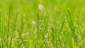Gouttes de pluie tombant sur l'herbe verte Concept de vivacité clips vidéos