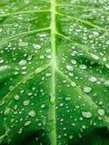 Gouttes de pluie tombant sur les feuilles, qui comme fond Photographie stock libre de droits