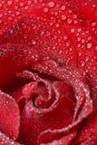 Gouttes de rosée roses de rouge photographie stock