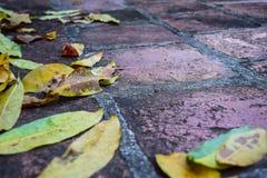 Gouttière de pluie complètement des feuilles d'automne photos stock
