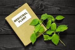 Goutweed (Aegopodium) y planta medicinal del directorio Imagenes de archivo
