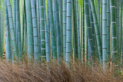 Gove de bambou de Kyoto images stock