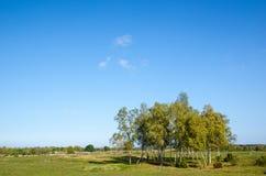 Gove de los árboles de abedul en el otoño temprano Imagen de archivo libre de regalías