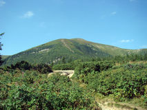 Goverla Skog på berglutningarna royaltyfri bild