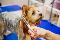 Governare un cane fotografia stock
