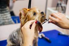 Governare un cane fotografia stock libera da diritti