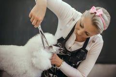 Governare un piccolo cane in un salone di peli per i cani fotografie stock libere da diritti