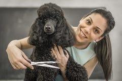 Governare un piccolo cane in un salone di peli per i cani immagine stock libera da diritti