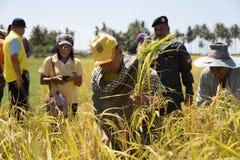 Governatore Mr di Trang Riso del raccolto di Dejrath Simsiri Immagine Stock