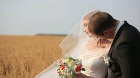 Governi baciare la sua bella sposa velata sul giacimento di grano giallo video d archivio