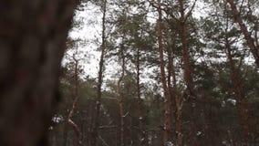 Governi la sposa felice di filatura o di giro che la tiene in sue mani nell'abetaia del tempo della neve durante le precipitazion stock footage