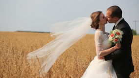 Governi tenero baciare la sua bella sposa mentre sul giacimento di grano giallo stock footage