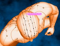 Acupuncture Point GV19 Houding, 3D Illustration, Blue Background Royalty Free Stock Photos