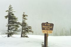 Falling snow at Mt. Hood White River Sno-Park Royalty Free Stock Photos