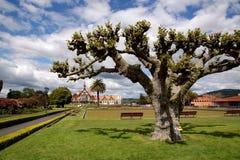 Government Gardens, Rotorua Royalty Free Stock Image