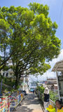 The Hong Kong government kill the 100 year old tree. The HK government cut down the 100 year old tree unnecessary that is one of the controversial topic in Hong Royalty Free Stock Photos