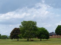 Governors island. Chairs under the trees in Governors island New York Stock Photography