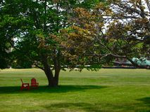 Governors island. Red chairs under the trees in Governors island Stock Images