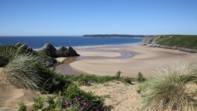 Gower Peninsula Wales uk Three Cliffs Bay with pink flowers stock footage