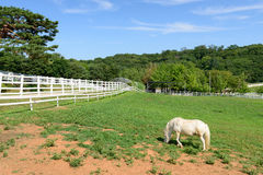 Goyang-si, Korea - July 16, 2015: Wondang horse ranch Royalty Free Stock Photography
