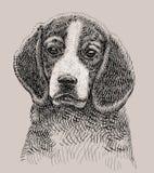 Gráfico artístico del perro Fotos de archivo libres de regalías