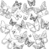 Gráfico blanco de la mosca del color del arte del insecto de la mariposa del vector Imagen de archivo libre de regalías