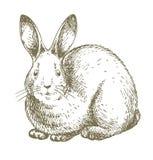 Gráfico blanco del conejito Fotografía de archivo libre de regalías