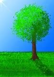 Gráfico da árvore Imagem de Stock Royalty Free