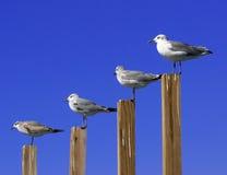 Gráfico da gaivota Imagens de Stock Royalty Free