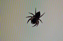 Gráfico de la araña Fotos de archivo libres de regalías