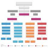 Gráfico de vector corporativo de organización vertical del organigrama Foto de archivo libre de regalías
