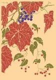 Gráfico de vector de la fruta de las uvas basado en el grabado de Japón stock de ilustración